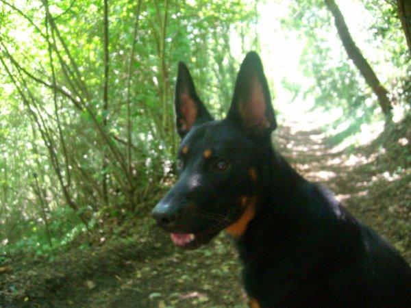 Toto dans les bois : creuser,attraper des batons,courrir partout mes jeux favoris!