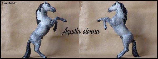 Aquilla Etarna