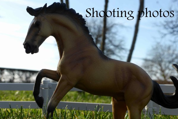 Shooting photos