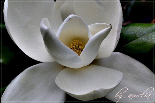 ---- Nature -----
