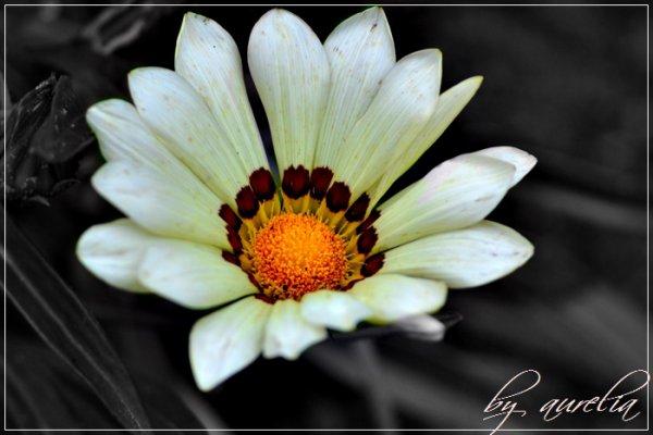 •• Flower ••