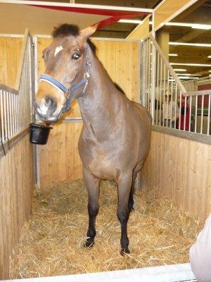 Salon du cheval le 6 12 2008 mais amie les animaux - Salon du cheval a mons ...