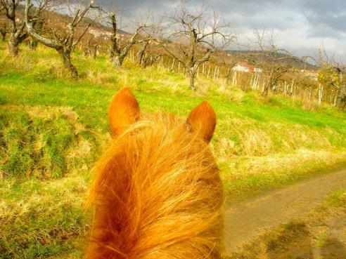 My wonderful pony.