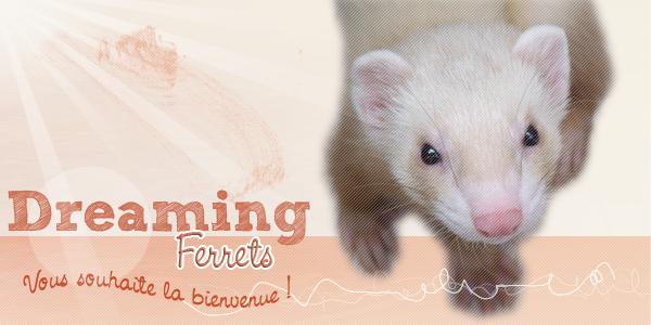 Bienvenue chez Dreaming-Ferrets
