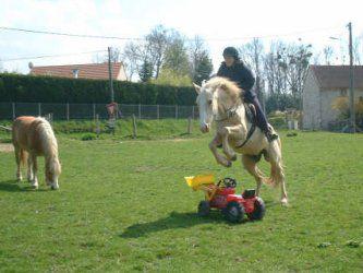 Un cheval trop rigolo blog de chevaux - Cheval rigolo ...