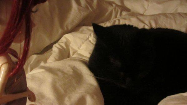Séance 2 : découverte de mon chat