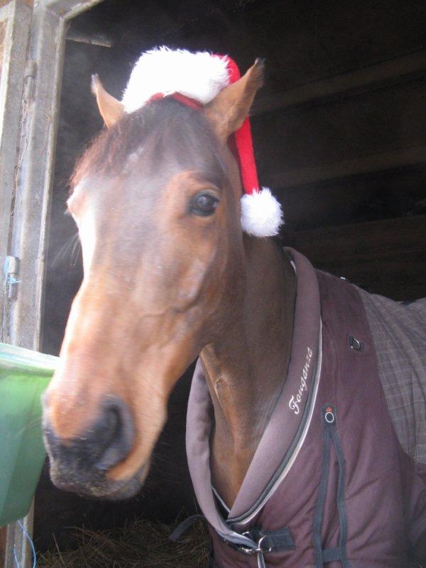 Mon Poney à Noel!!!