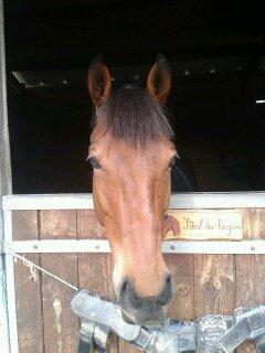 Mon poneyy