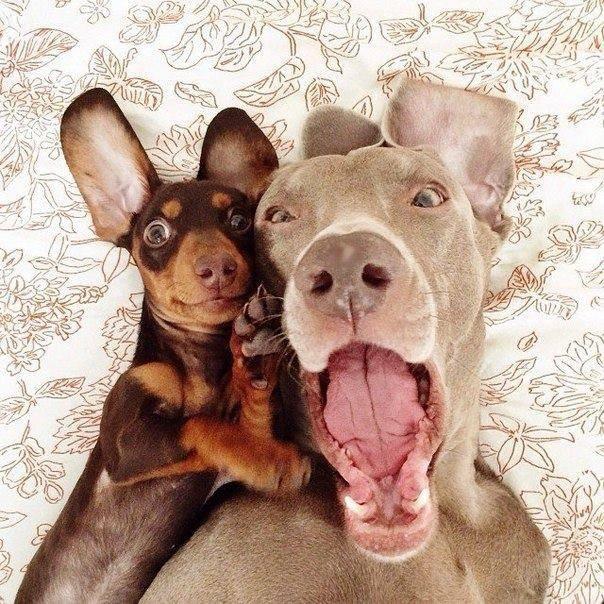 Hé copain, on fait un selfie?