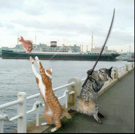 qui aime les chats
