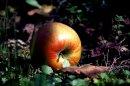 Photo de My-Eden-Garden