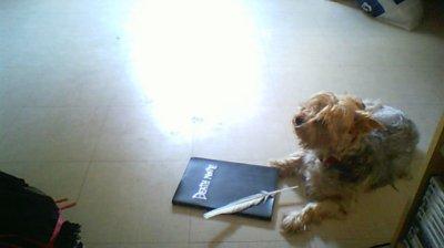 Ma présentation+Une ptite de Mon chien ^^