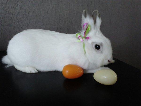 Bonnes fêtes de Pâques a tous =)