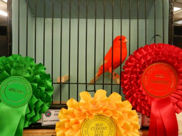 Best in show at 2014 National at Stafford