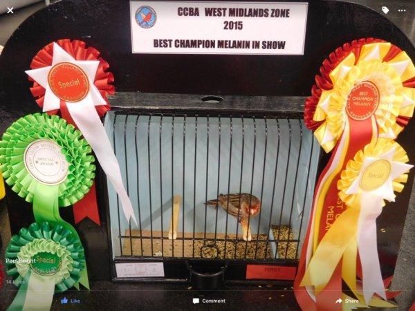 WEST MIDLAND ZONE CCBA 2015 SHOW