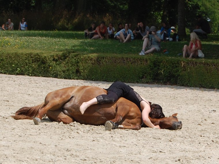 Spectacle Haras de Lion d'Angers