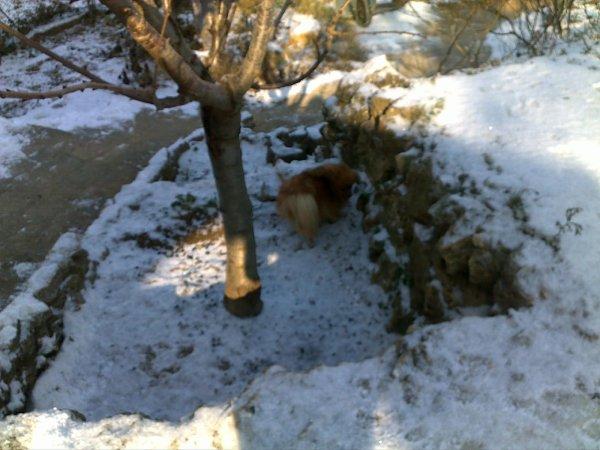 Evanna dans la neige