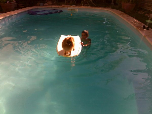 Le surf en piscine