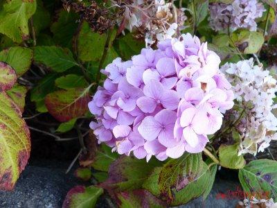 Défilé de fleurs