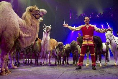 « Dépaysement garanti »  Groupe d'animaux exotiques, Sandro Montez