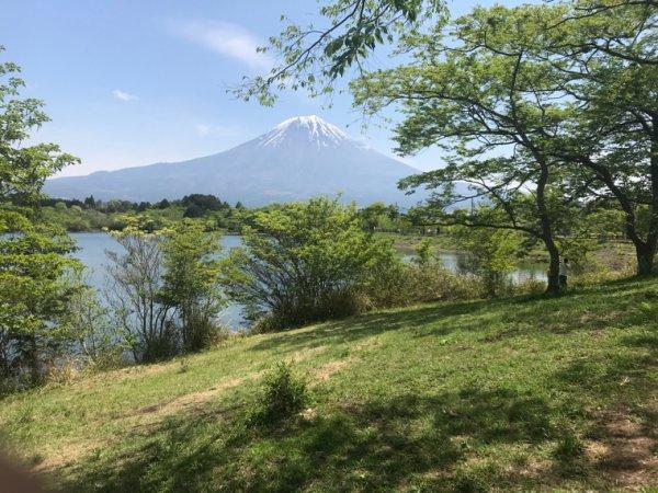 Camp in Tanuki rake