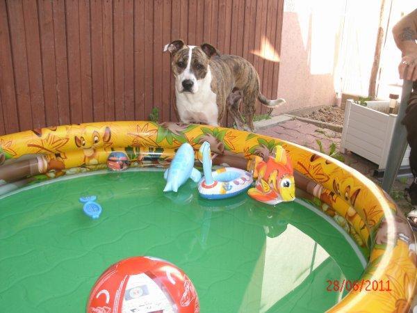Moi aussi je veux aller dans la piscine