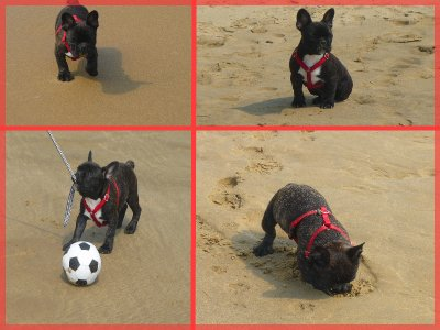 Gordon à la plage