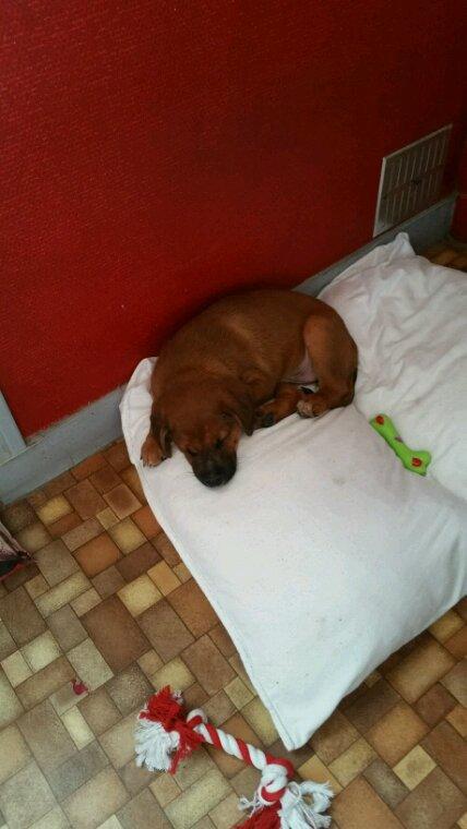 Voilà après avoir perdu ma chienne de 11 ans voici le remplaçant :michoko