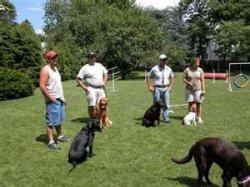 Schutzhund trained dogs – smarter dogs