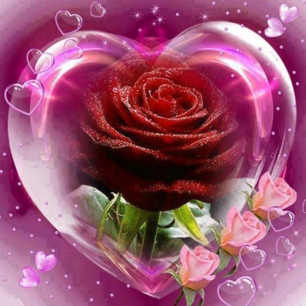 bonjour a tout mes amies et amis que je adore