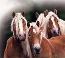 Photo de miss-l0ve-chevaux