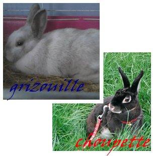presentation des lapines