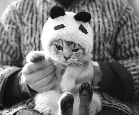 ptit chat panda