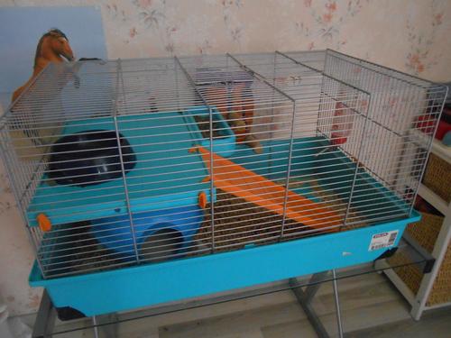 ●La cage de Célestine●