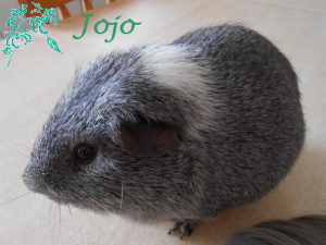 ♥Hommage à toi Jojo, on t'aime...♥
