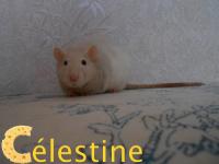 ●Repose en paix Célestine, on t'aime...●