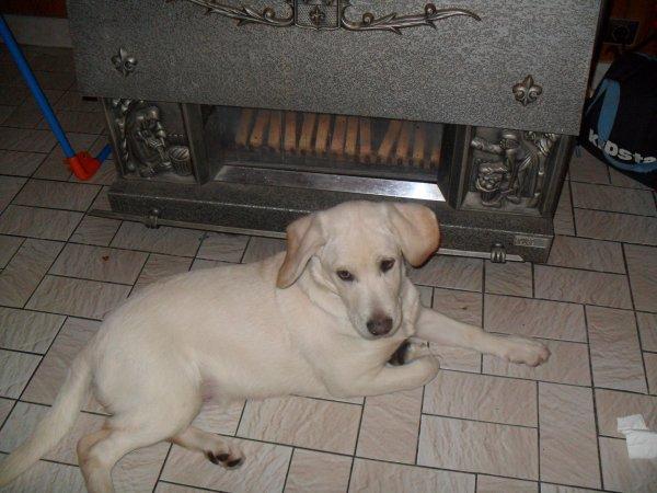 mon chien elle va avoire 10 moi elle s'appelle mirabelle ses loi qui a donné le prénon de mon chien