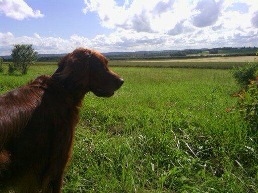 promenade dans la campagne normande
