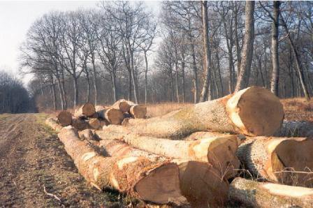 """L'homme est la seule créature qui va couper des arbres, en faire du papier, et écrire """"sauver les arbres""""  dessus.."""