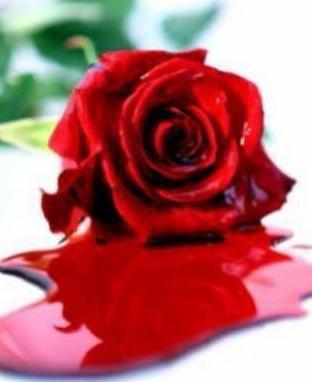 Une Belle Fleur D Amour Blog De Laly413