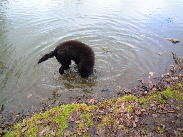 mon chien qui et dans l'eau
