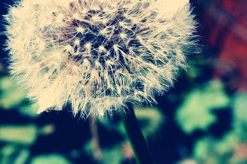 Les rêves sont ma réalité. Un monde merveilleux où j'aime vivre.