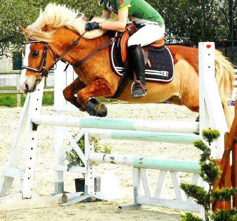 Le bien être du cheval est bien plus important que le notre.