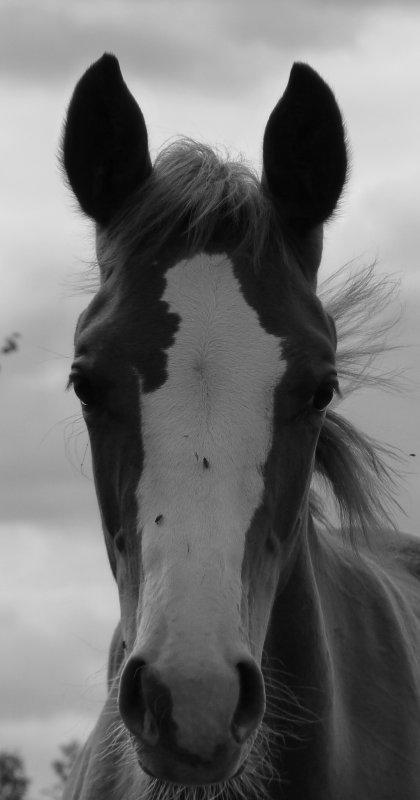 N°9 Photographe-equine-12