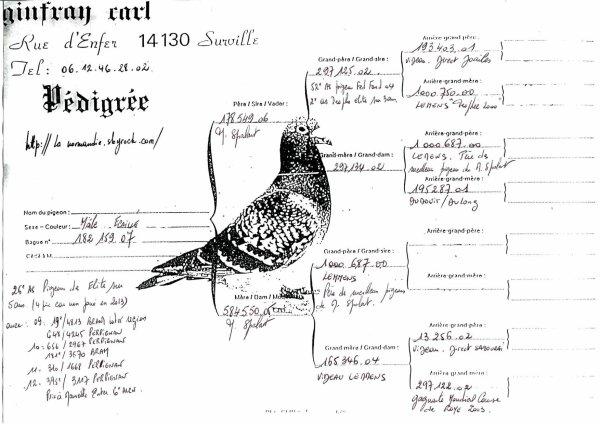 Vente du 26ème As pigeon des Elites sur 5 ans
