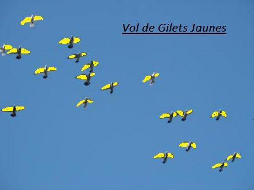 Vol de Gilets jaunes