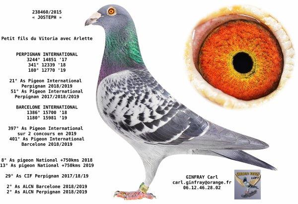 Et si JOSTEPH était le meilleur pigeon européen sur Perpignan des 3 dernières années