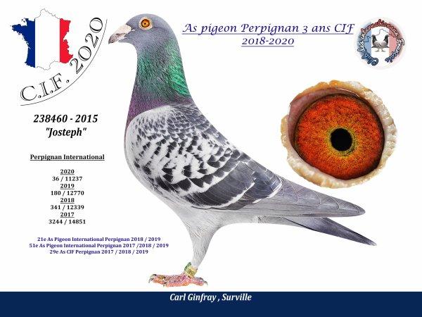 C'est officiel : JOSTEPH est déclaré meilleur pigeon EUROPEEN sur PERPIGNAN sur les 3 dernières années. Que du BONHEUR