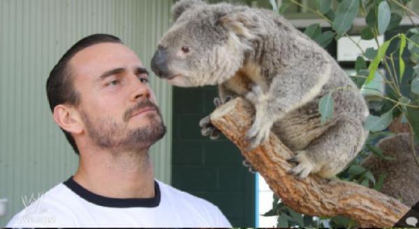 cm punk + koala = trop mimi