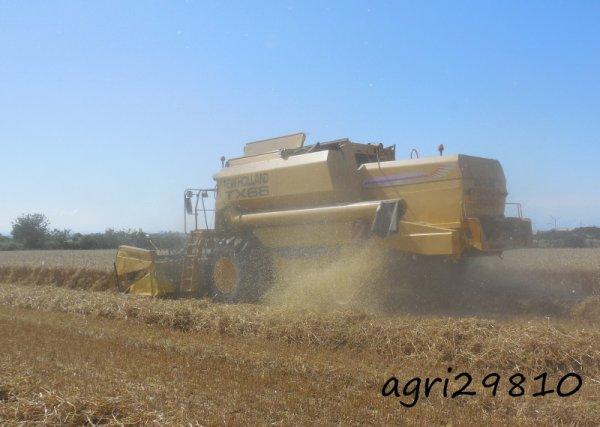 Moisson de blé et broyage 2014